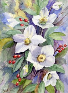 Christmas Roses. A watercolour by Sylvia Twiss