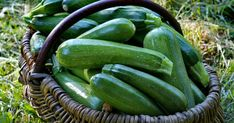 Animals And Pets, Cucumber, Zucchini, Vegetables, Garden, Outdoor, Recipe, Decor, Pets