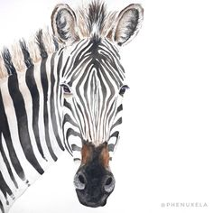 Isn't it adorable? Zebras are one of my favourite animals, they are so beautiful with their stripes. Can you imagine the personality of this zebra? It looks so calm and friendly to me on this drawing. Still inspired to paint the next realistic watercolor painting.  #watercolor #watercoloranimal #watercolour #watercolorzebra #animalpainting #zebra #watercolorpainting #drawinginspiration  @Phenuxela <3 Watercolor Paintings Of Animals, Animal Paintings, Watercolor Drawing, Pattern Ideas, Zebras, White Ink, Fabric Patterns, My Drawings, Personality