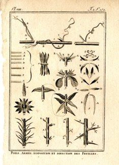 "buffon botanical french 1775 engraving 4 x 6""  $25 - 09"