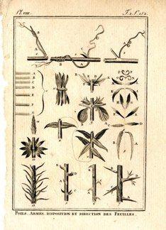 "buffon botanical french 1775 engraving 4 x 6""  $25 - 09"