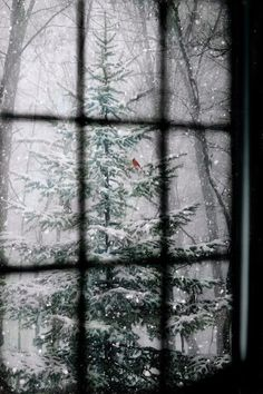 Christmas tree smelling of stars and snow and pine resin - inhale deeply and fill your soul with wintry night...