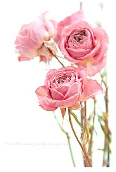 I just love roses!
