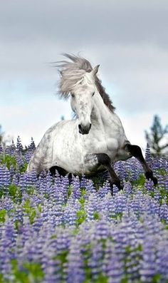 A horse in a field of flowers!