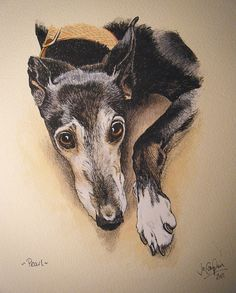 """Pearl, pen and ink with watercolour, 10"""". By Jo van Kampen. This resembles our """"Billie""""!"""