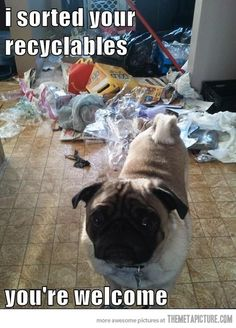 Google Image Result for http://static.themetapicture.com/media/funny-pug-trash-mess.jpg
