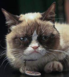Happy birthday Grumpy Cat!: Beroemdste internetkat viert haar tweede verjaardag - opmerkelijk - De Morgen