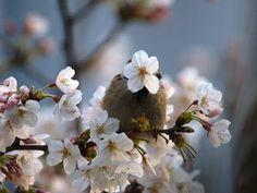 【胸キュン】スズメが可愛すぎて癒されちゃう - NAVER まとめ Sparrows, Plants, Plant, Planets
