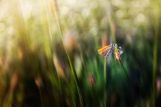 Butterfly by Kristian Potoma on 500px