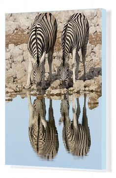 Poster Print-Pair of BurchellA's Zebra (Equus quagga burchellii) standing at waterA's edge to drink Poster sized print made in the USA Fine Art Prints, Framed Prints, Poster Prints, Canvas Prints, Water Reflections, Zebras, Different Patterns, 500 Piece Jigsaw Puzzles, Photo Puzzle