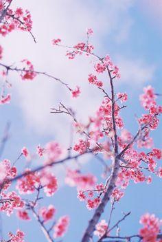 Spring Wallpaper, Flower Wallpaper, Flower Aesthetic, Pink Aesthetic, Flower Backgrounds, Phone Backgrounds, Adventure Island, Dallas Museums, Whimsical Art