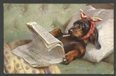 Dogs, C. Reichert, Sick Dachshund Reading Newspapaer in the Bed, Old Postcard