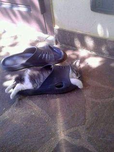 Silly kitten!!