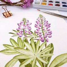 Watercolor Bird, Watercolor Paintings, Beginner Painting, Botanical Art, Flower Art, Creative Outlet, Dawn, Artist, Water Colors