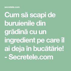 Cum să scapi de buruienile din grădină cu un ingredient pe care îl ai deja în bucătărie! - Secretele.com Good To Know, Animals And Pets, Gardening, Photography, Agriculture, Plant, Pets, Photograph, Garten