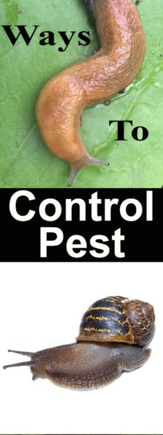Garden Pest Control entails the regulation and control of pests, which is a type of species that are damaging to plants. Garden pests diminish the quality and Slugs In Garden, Garden Insects, Garden Pests, Garden Fertilizers, Garden Tools, Henna Designs, Organic Gardening, Gardening Tips, Vegetable Gardening