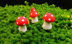 Fairy Garden Kit  Meadow Flutter Gift Set 9 Items | Fairy Gardens |  Pinterest | Fairy, Gardens And Miniature Gardens