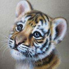 Now bring the painter in you come to life by creating this baby tiger diamond painting. This is a portrait painting. It shows innocent face of tiger cub. Comes with square diamonds to complete your masterpiece. Baby Tigers, Cute Tigers, Tiger Cubs, Tiger Tiger, Bear Cubs, Cubs Tattoo, Tiger Tattoo, Tattoo Baby, Tiger Artwork