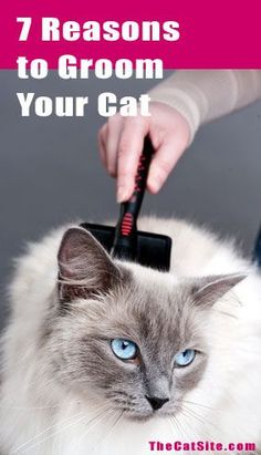Seven Reasons Why You Should Regularly Groom Your Cat - TheCatSite.com Community