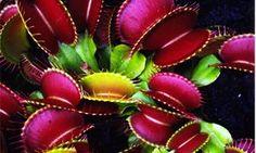 http://best5.it/post/piante-carnivore-5-splendidi-esemplari/