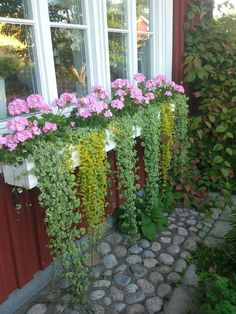 Container gardening plan 8647082461 to see today. Garden Inspiration, Vertical Garden Indoor, Plants, Garden Boxes, Vegetable Garden Boxes, Container Gardening Flowers, Lawn And Garden, Small Garden Landscape, Garden Projects