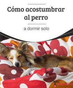 Acostumbrar al perro a dormir solo - Mejor con Mascotas  ¿Acaba de comprarse un cachorro y no consigue que duerma en su cesta? Descubra aquí como acostumbrar al perro a dormir solo y trucos para conseguirlo.