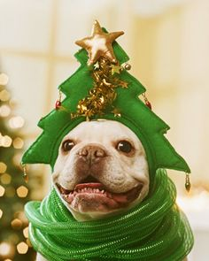 French Bulldog in Christmas Tree Costume.