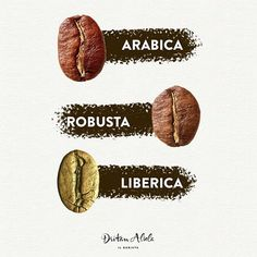 coffee beans Most popular types of coffee beans! W - coffee Coffee Barista, Coffee Logo, Coffee Type, Coffee Drinks, Coffee Shop, Coffee Facts, Coffee Quotes, Types Of Coffee Beans, Coffee Presentation