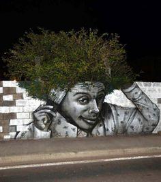 Cet arbre-afro est visible à Fort-de-France, en Martinique
