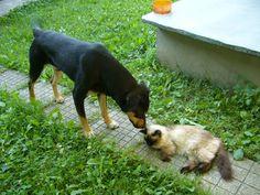 Rex şi Gusy.