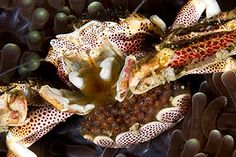 I bloomin love crabs