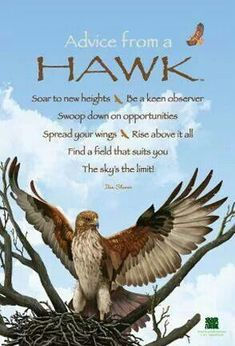 Advice from a Hawk – Witches Of The Craft® Hawk spirit guide animal totem Hawk Spirit Animal, Spirit Animal Totem, Animal Spirit Guides, Animal Totems, Animal Meanings, Animal Symbolism, Om Gam Ganapataye Namaha, Native American Quotes, Animals