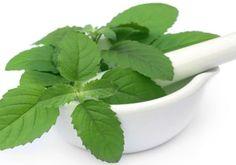 Amazing Healing Benefits of Basil Herb