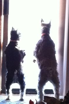 Do Do Do Lookin Out My Backdoor.. Lol.. Bowlegged Pupsters.. <3's