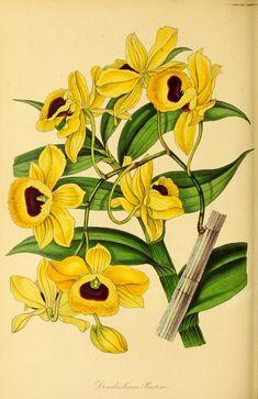 v.6 (1839) - Paxton's magazine of botany, - Biodiversity Heritage Library