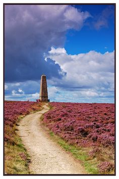 Captain Cook's Monument at Gribdale on the North Yorkshire Moors, England. The heather looks lovely.