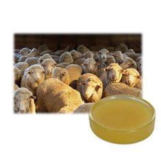 Lanolin Cream, Product Description, Html, Food, Essen, Meals, Yemek, Eten