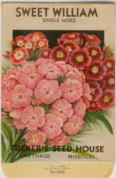 BEAUTIFUL VINTAGE FLOWER SEED PACKET from the 1930s or earlier. SWEET WILLIAM!!! (SINGLE MIXED)!!! One original unused seed packet in excellent