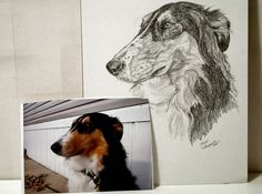 Custom Pencil Sketches of your pet by renowned pet artist - DEBBIE SAMPSON - On sale w/ free shipping @Coupaw