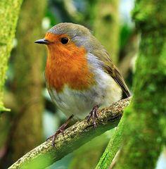 Just the sweetest bird