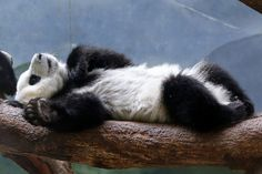Mei Huan, 6/15/14 - Lazy days of Summer | Flickr - Photo Sharing!