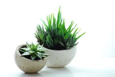 ceramic planter! I could definitely do that. I know what's going on my plant shelves this year!