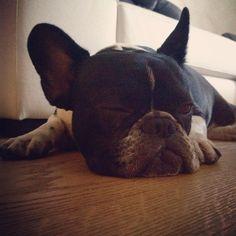 #CostantinoVitagliano Costantino Vitagliano: Un occhio aperto e uno chiuso ahahaha oggi non vuole proprio svegliarsi... #tac #bulldogfrancese #frenchbulldog #frenchie #dog #puppy #love #truelove #friend #bestfriend #sunday #morning