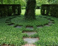 1000 Images About Ground Cover On Pinterest Traditional