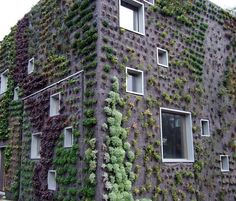 Living Walls in the Netherlands    These living walls (also designed by Patrick Blanc) are covered in felt and rock wool, which helps irrigate the embedded plant life.