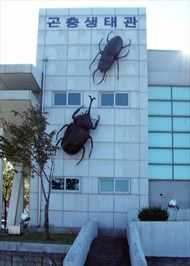 Each of these two beetles is over twenty feet long, mounted on the side of the side of the Yangyang Insectarium, in Yangyangk, Korea.