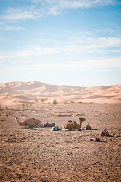 Sahara, Erg Chebbi, Morocco   - #morocco #sahara #desert Maroc Désert Expérience tours http://www.marocdesertexperience.com