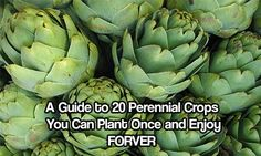 A Guide to 20 Perennial Crops You Can Plant Once and Enjoy