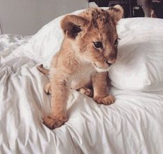 Find images and videos about cute, animals and yes on We Heart It - the app to get lost in what you love. Cute Wild Animals, Baby Animals Pictures, Cute Little Animals, Cute Animal Pictures, Cute Funny Animals, Animals Beautiful, Animals And Pets, Cute Cats, Funny Pets