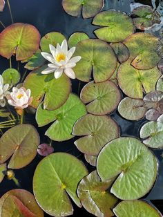 Painting Inspiration, Art Inspo, Tracing Art, Water Beads, Mirror Painting, Lily Pond, Water Art, Mosaic Garden, Natural Forms